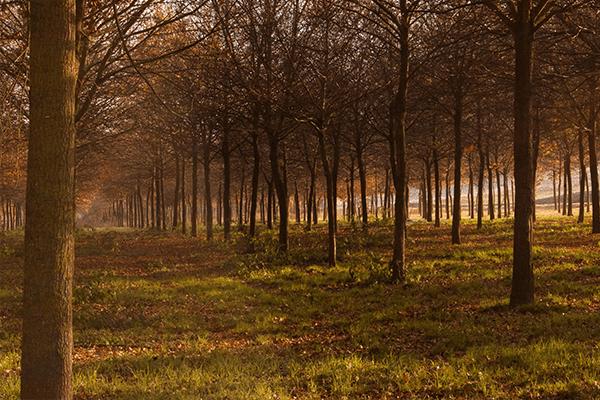 Parchi naturali in Umbria