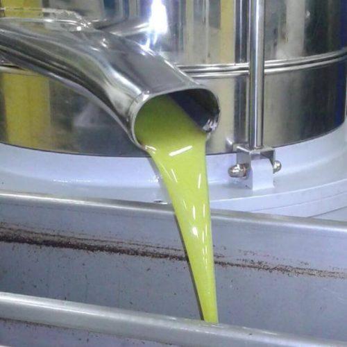 Evento raccolta olive 2019 olio