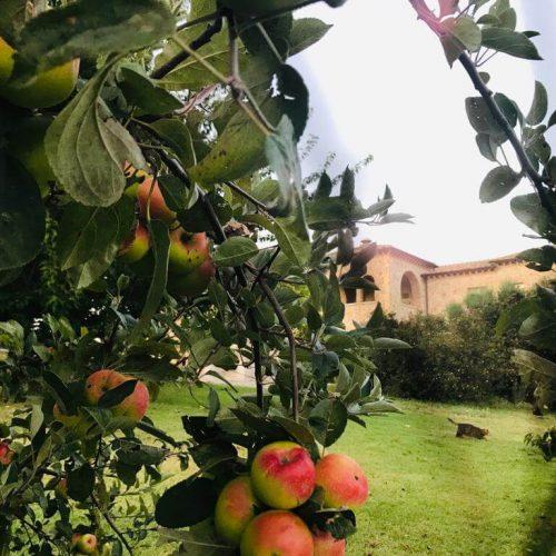 Frutta della Tenuta del Gallo Relais